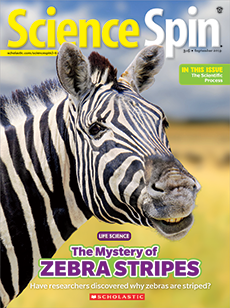 The Mystery of Zebra Stripes Science Spin magazine.
